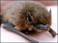 Bat- generic