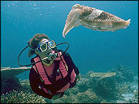 Diver with cuttlefish