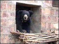 Picture of bear in sanctuary supplied by International Animal Rescue