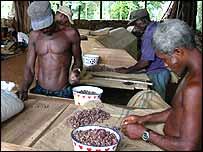 Trabajadores en una plantación de cacao en Príncipe