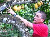 Claudio Corallo en su plantación de cacao