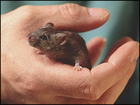 Mouse - RDS/Wellcome Trust photo