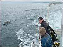 Pembrokeshire dolphins (Picture: Countryside Council for Wales)