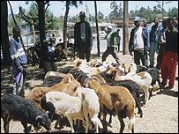 A goat market