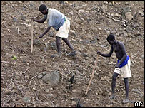 Farmers plant seeds on their land