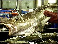 Cod fishing, PA