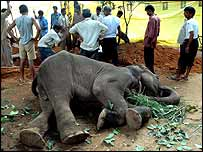 Komala and zoo officials
