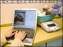 Baby panda being weighed and laptop recording vital data