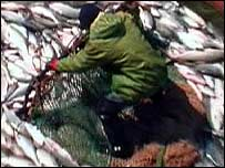Fisherman with salmon   TVE