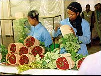 Highland rose being packaged for export