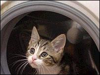 Milo the kitten