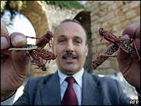 A Lebanese official shows off locusts which have arrived in the country in swarms and have also appeared in Cyprus