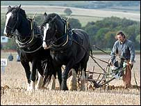 Horses ploughing   PA
