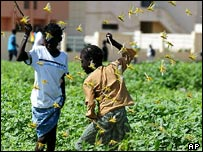 Two girls fight with locusts in Dakar, Senegal