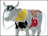 Vaclav Havel's cow