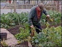Trevor Peterson at work on his allotment