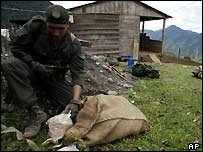 Colombian policeman examines seized cocaine