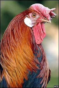 The French cockerel (coq Gaulois)
