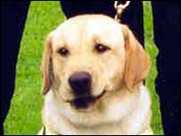 Jake the sniffer dog