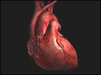 Computer generated image of the human heart (BBC)