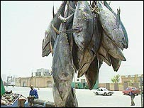West African tuna (BBC)