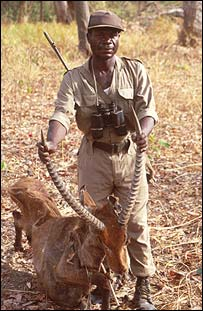 Ghanian wildlife ranger holds a waterbuck antelope (Brashares)