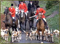 The Derwent Hunt on horses, with hounds, dogs