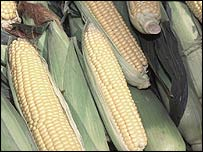 Corn (generic)