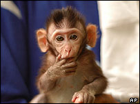 Baby macaque offered for adoption in Thailand