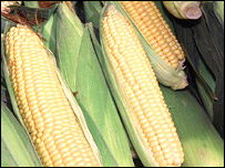 Corn, AP
