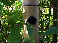 Camera in bamboo (BBC)