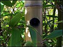 Camera in bamboo (BBC)