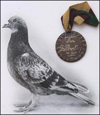 Голубь Коммандо и его медаль