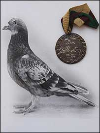 Commando won the animal equivalent of the Victoria Cross, the PDSA Dickin medal