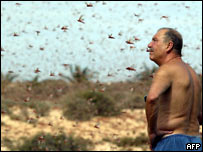 Locusts in the Canary Islands