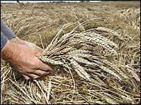 Wheat, PA