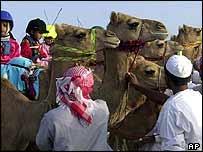 Gulf camel riders