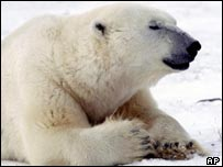 Polar bear (AP)
