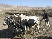 Field ploughing in Afghanistan