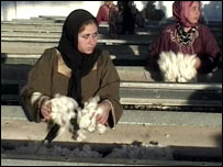 An Egyptian woman sorting cotton fibres