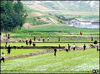 North Korean farmers work at their rice paddies as two Koreas delegations meet for their second day meeting at the North Korean border city of Kaesong, May 17, 2005. 