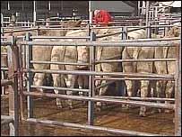 Hailsham cattle market