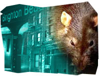 Rats and New York