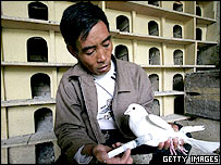 A health worker injects a vaccine into a pigeon on May 27, 2005 in Xining of Qinghai Province, China.