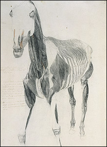 George Stubbs, Study of the Muscles (Anterior), 1756-58 © Royal Academy of Arts, London