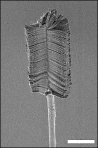 Nano brush (Rensselaer Polytechnic Institute) Scale-bar: 100 microns (millionths of a metre)