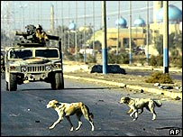 Dogs and soldiers in Falluja