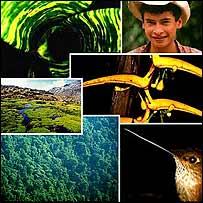 Biodiversidad en Colombia. Foto cortes�a Instituto Humboldt.