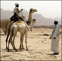 Beja people with camels