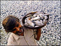 A worker carries dead fish in a basket at Kankaria Lake in Ahmadabad, AP